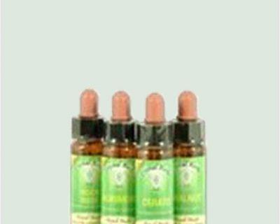 Elm - Bach Flower Remedies 10ml